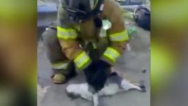 Bomberos en México rescatan a gatito de incendio y lo reaniman con RCP