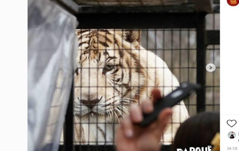 Empleada de Parque Safari se quejó