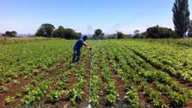 Sequía y falta de mano de obra: la tormenta perfecta que aqueja a la agricultura chilena