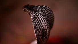 Hombre alquila una serpiente para matar a su esposa y robarle su dinero